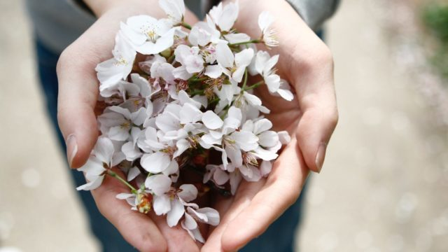 Image of hands receiving or giving flower blossoms
