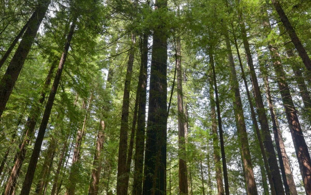 Photo of tall trees