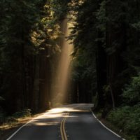 Image of a road in forest with light beaming in
