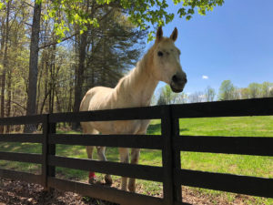 White Horse at Eagle Ranch